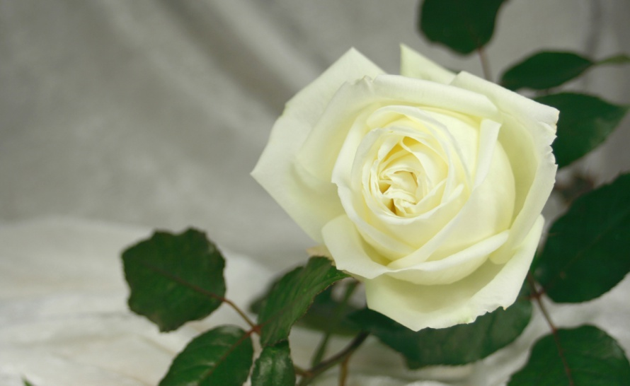 funeral-rose-1224x752